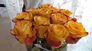 Bilder Sträuße Rosen Gelb