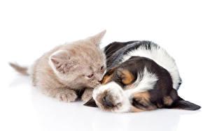 Image Dog Cats White background 2 Kitty cat Basset Hound Sleeping Puppy Animals