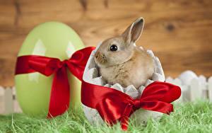 Fotos Ostern Kaninchen Jungtiere Ei Schleife Tiere