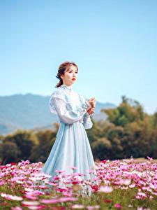 Bilder Grünland Asiaten Kleid Braune Haare