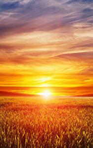 壁纸、、風景写真、朝焼けと日没、畑、空、太陽、