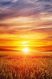 Bilder Landschaftsfotografie Sonnenaufgänge und Sonnenuntergänge Acker Himmel Sonne Natur