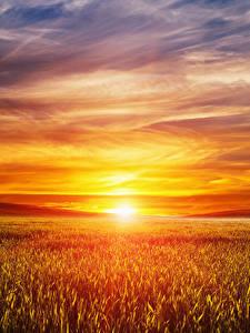 Bilder Landschaftsfotografie Sonnenaufgänge und Sonnenuntergänge Acker Himmel Sonne