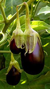 Hintergrundbilder Gemüse Großansicht Aubergine