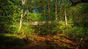 Bilder Vereinigte Staaten Wälder Flusse Brücken Kalifornien Bäume Walnut Creek Natur