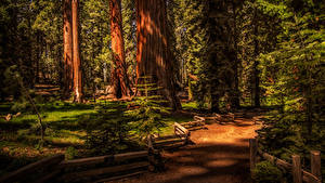 Fotos USA Park Zaun Bäume Fichten Sequoia National Park Natur
