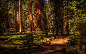 Fotos USA Park Zaun Bäume Fichten Sequoia National Park
