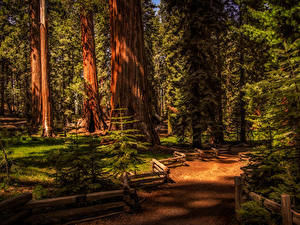 Fotos USA Park Zaun Bäume Fichten Sequoia National Park