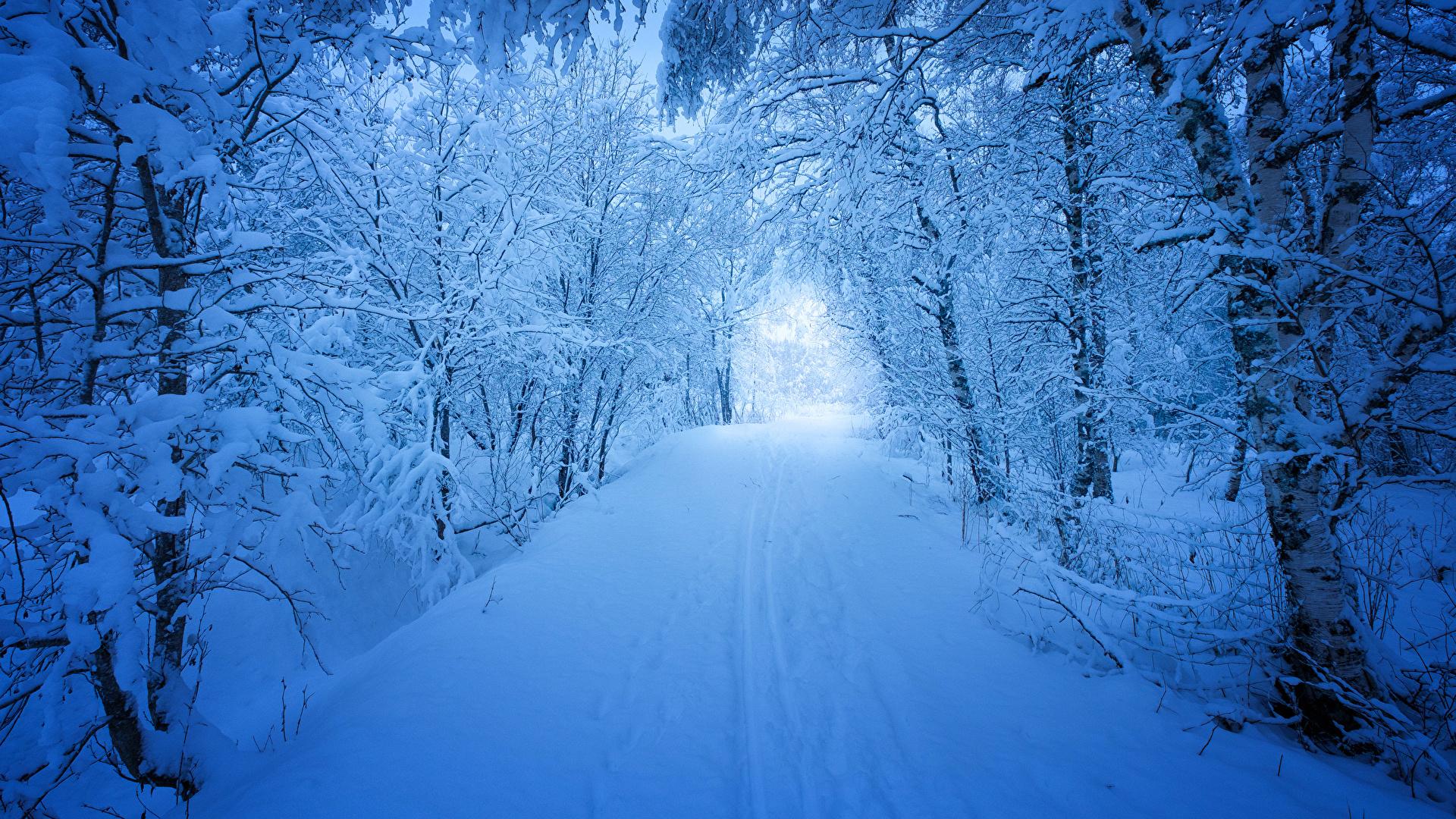 壁紙 1920x1080 季節 冬 森林 道 雪 木 自然 ダウンロード 写真