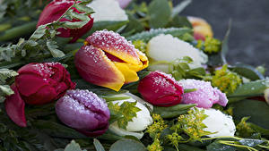 Fotos Tulpen Hautnah Tropfen Eis Blumen