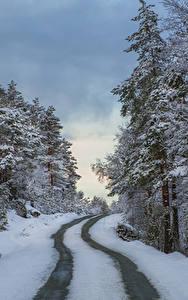 Fotos Norwegen Winter Wälder Straße Schnee Rogaland Natur