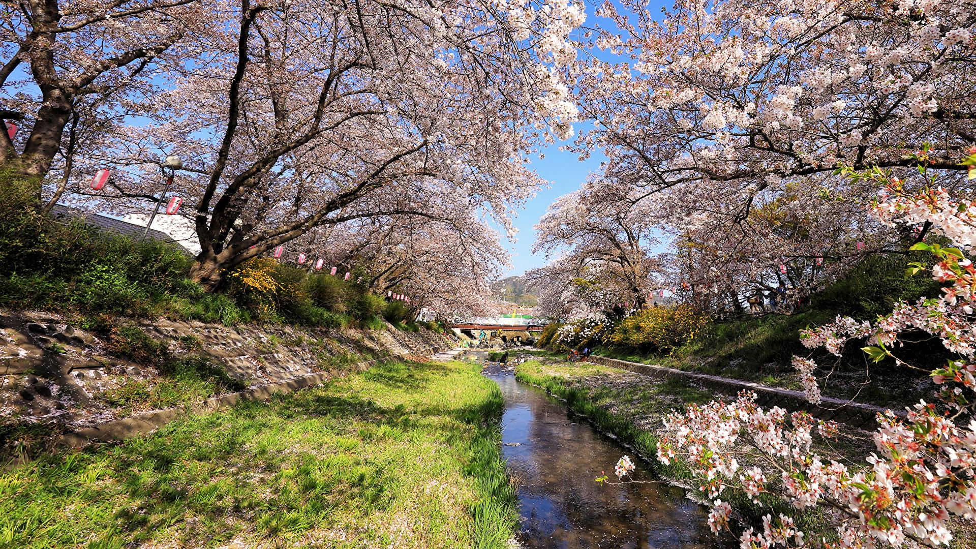 壁紙 19x1080 日本 東京都 春 公園 花の咲く木 自然 ダウンロード 写真