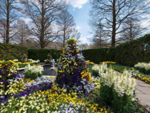 Fotos USA Garten Ackerveilchen Schwertblume Design Strauch Longwood Gardens Kennett Square Natur