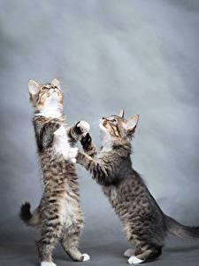 Bilder Katze Kätzchen Zwei