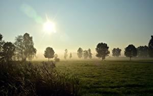 Hintergrundbilder Sonnenaufgänge und Sonnenuntergänge Grünland Gras Bäume Nebel Sonne