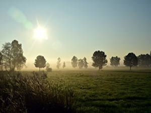 Pictures Sunrises and sunsets Meadow Grass Trees Fog Sun Nature