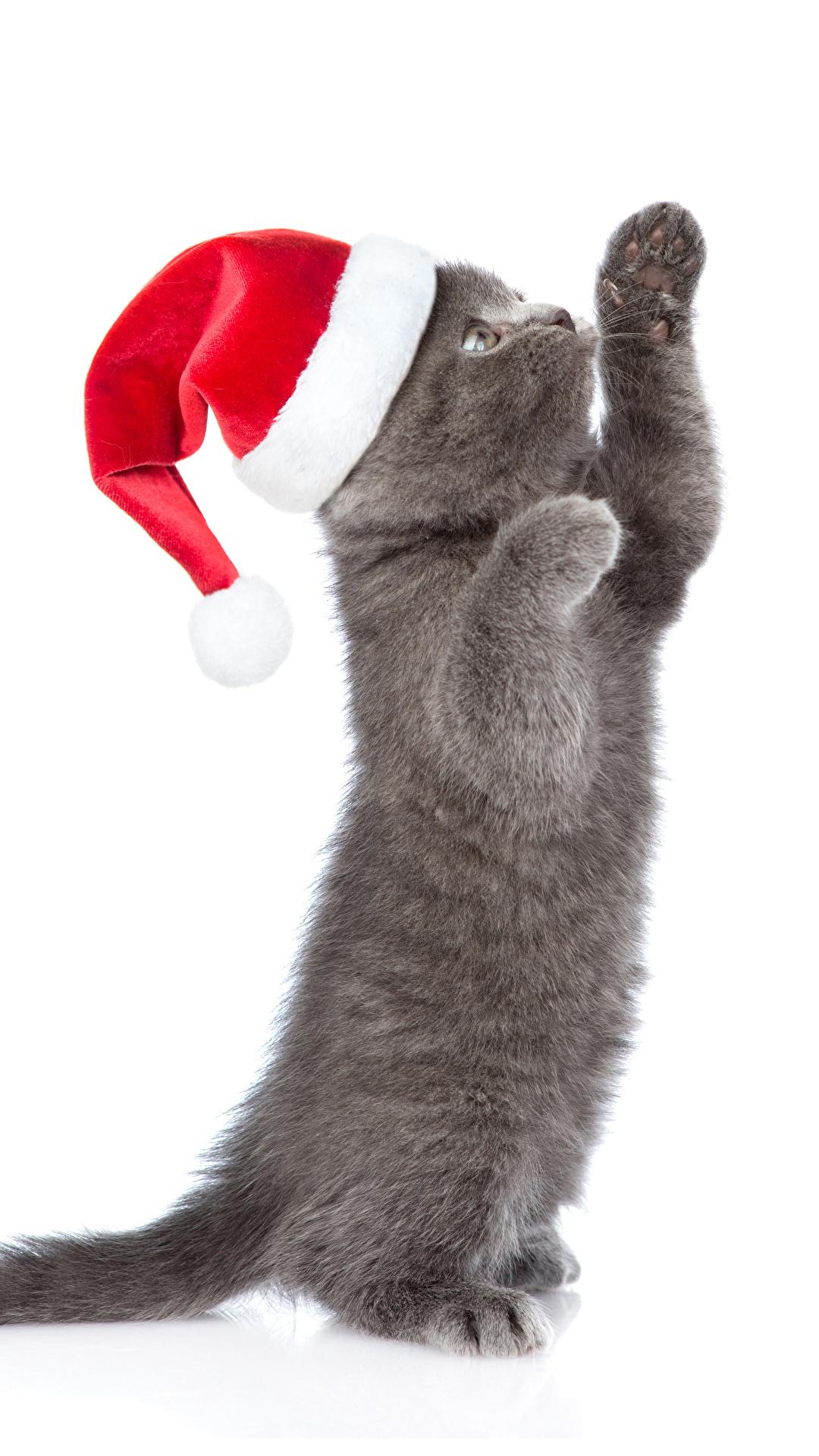 Bilder Katzenjunges Katze Neujahr graue Mütze Pfote Tiere Weißer hintergrund 1080x1920 für Handy Kätzchen Katzen Hauskatze Grau graues ein Tier