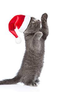 デスクトップの壁紙、、新年、飼い猫、白背景、子猫、暖かい帽子、肉球、灰色、動物