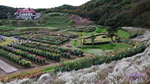 Images Japan Gardens Bush Akita international dahlia garden Nature