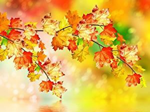 Hintergrundbilder Herbst Blatt Ast