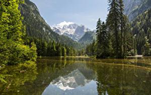 Fotos Österreich Gebirge Wälder See Landschaftsfotografie Fichten Gosau