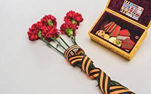 Papéis de parede Dianthus Dia da Vitória 9 de maio Cinza Fundo cinza Fita Ordem medalha Medalha Flores