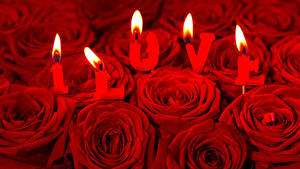 Papéis de parede Dia dos Namorados Rosas Velas Amor Vermelho Inglês Flores