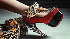 Fotos Hautnah Schlangen Bein High Heels Glamour ein Tier