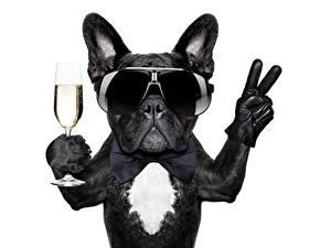Fotos Hunde Weißer hintergrund Komische Brille Weinglas Bulldogge ein Tier