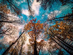 Bilder Himmel Herbst Ast Wolke Untersicht Ansicht von unten Bäume Natur