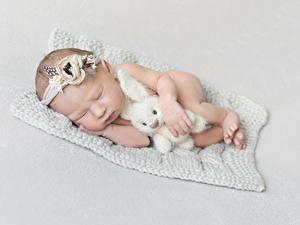 Bilder Hasen Spielzeuge Grauer Hintergrund Säugling Schlafende Kinder