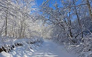 Bilder Winter Wege Bäume Schnee Ast Natur