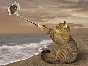 Fotos Kreativ Katze Küste Lustiger Smartphone Sitzend Selfie ein Tier