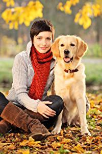 Hintergrundbilder Herbst Hunde Retriever Braunhaarige Sitzt Schal Blatt Starren Mädchens
