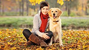 Hintergrundbilder Herbst Hunde Retriever Braunhaarige Sitzt Schal Blatt Starren junge frau