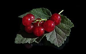 Bilder Beere Johannisbeeren Schwarzer Hintergrund Blattwerk Rot Lebensmittel