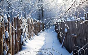 Wallpapers Winter Branches Snow Fence