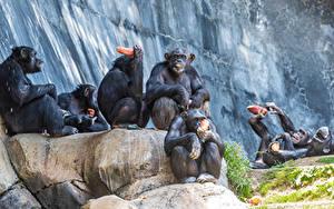Pictures Monkeys Sit Animals