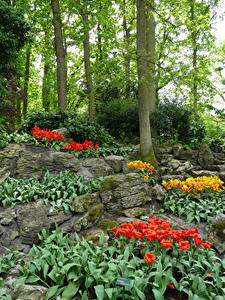 Fotos Niederlande Park Steine Tulpen Frühling Bäume Keukenhof Natur