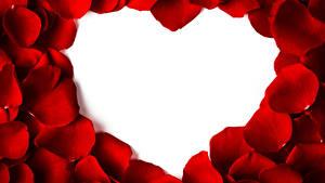 Papéis de parede Dia dos Namorados Cartão do molde Pétalas Vermelho Coração Flores