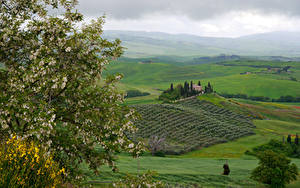 Pictures Italy Tuscany Landscape photography Fields Flowering trees Hill Branches