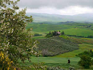 Pictures Italy Tuscany Landscape photography Fields Flowering trees Hill Branches Nature
