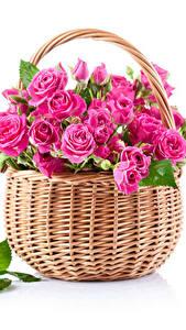 Hintergrundbilder Rosen Weißer hintergrund Weidenkorb Rosa Farbe Blatt