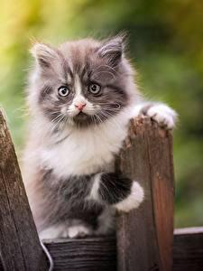 Hintergrundbilder Katze Kätzchen Zaun Blick