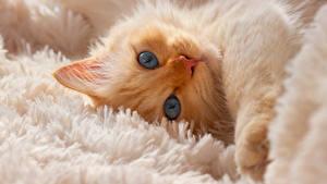 Hintergrundbilder Katze Kätzchen Schnauze Blick Tiere
