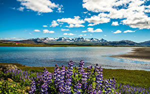Bilder Island Landschaftsfotografie See Himmel Lupinen Wolke Snaefellsnesog Hnappadalssysla