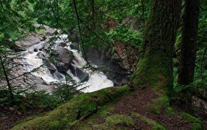 Fotos USA Wasserfall Ast Laubmoose Baumstamm Auger Falls