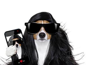 Bilder Hunde Weißer hintergrund Haar Jack Russell Terrier Smartphone Brille Komische Tiere