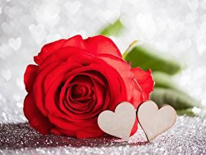 Papéis de parede Rosas Dia dos Namorados Vermelho Coração Flores