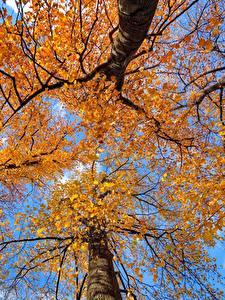 Fotos Herbst Bäume Baumstamm Untersicht Ansicht von unten